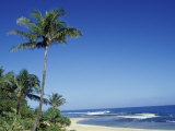 Palm Trees and Sand at Ha'ena Beach  Kauai  Hawaii  USA