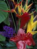 Colorful Tropical Flowers  Hawaii  USA