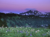 Paradise Twilight  Mt Rainier National Park  Washington  USA