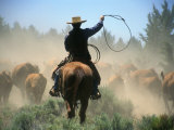 Cowboy Driving Cattle with Lasso through Central Oregon  USA
