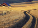 Roadway Through Wheat to Barn  Near Moscow  Idaho  USA