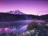 Reflection Lake with Summer Alpine Wildflowers  Mt Rainier National Park  Washington  USA