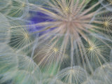 Seed Head Design  Gennesse  Idaho  USA