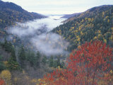 Foggy Valley from Morton Overlook  Great Smoky Mountains National Park  Tennessee  USA