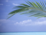 Palm Frond Over Tropical Water