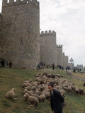 Man and sheep Surrounding Avila  Rebuilt by Alfonso VI in 1090 Ad  9 Gate Entrance to the City