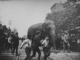 Boys Walking Near an Elephant down the middle of Atlantic St near Nevins from the Barnes Circus