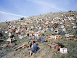 Extras Playing Dead People Hold Numbered Cards Between Takes During Filming of &quot;Spartacus&quot;