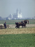 French Farmer Laying Fertilizer on His Field with a Team of Percheron Horses