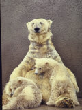 Hilda  a Polar Bear with Twins at Detroit Zoo Animal Conservation Wild Animal Propagation Trust