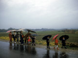Schoolchildren and Parents under Umbrellas from Spring Rain on Road Between Osaka and Kyoto