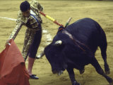 "Bullfighter Francisco Ribera  Known as ""Paquirri "" Finessing a Bull in the Ring"