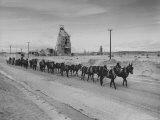 Trademark Twenty Mule Team of the US Borax Co Pulling Wagon Loaded with Borax