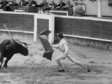 Spanish Matador Luis Miguel Dominguin Making Pass at Charging Bull During Bullfight