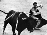 Matador Julian Marin and Bull in the Ring During a Bullfight Celebrating the Fiesta de San Ferman Aluminium par Tony Linck