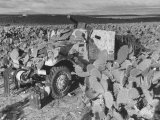 Machine Gun Equipped Half Track Camouflaged by Cactus Pads During WWII for Control of North Africa