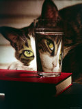 Cat Peering Into Glass Reflects Its Image in Reverse  Creating Perfect Example of Light Refraction