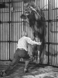 Animal Trainer Jules Jacot Training a Lion  one of the 21 big cats He Will Use Next Year