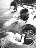 Three Female Mikimoto Pearl Divers with Buckets as They Prepare to Dive Down 20Ft for Oysters
