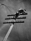 NY Telephone Co Lineman Wallace Burdick Repairs Telephone Lines Between Valhalla and Brewster