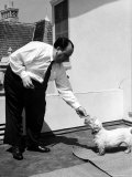 Director Alfred Hitchcock Standing Outside at Home  Feeding His Sealyham Terrier  Mr Jenkins