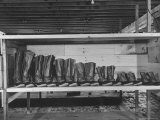 Mail Order Co LL Bean's Famous Maine Hunting Shoes Lined Up by Size from 6 1/2 to 18 In