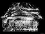 Stroboscopic Image of Ballerina Nora Kaye Doing a Pas de Bourree