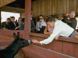 California Governor Candidate Ronald Reagan Petting Donkey  While on the Campaign Trail