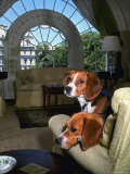 Pet Beagles of President Lyndon B Johnson  Sitting Together in White House Sitting Room