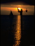 Pelicans and a Sailboat in the Sunset at Key Biscayne  Florida