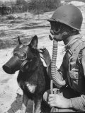 Soldier and German Shepard Wearing Gas Masks for Chemical Warfare Maneuvers