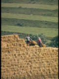 Czechoslovakian Peasants Working in the Field
