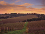 Early Spring over Knutsen Vineyards in Red Hills above Dundee  Oregon  USA