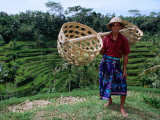Rice Farmer with Baskets  Ubud  Indonesia