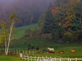 Horses in Field  Near Grandville  Vermont  USA