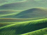 Wheat Springs in the Hills of the Palouse Country  Idaho  USA