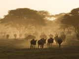 Wildebeest Migration  Tanzania