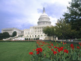 Capitol Building and Colorful Flowers  Washington DC  USA