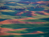 Palouse Region From Steptoe Butte  Whitman County  Washington  USA