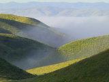 Temblor Range  Overlapping Hills in Fog  Kern County  California  USA