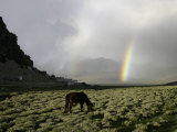 Horse with Rainbow  Tibet