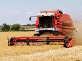 Combine Harvester Harvesting Crop  England
