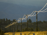 Power Lines by Road Side Reflecting Evening Light  New Zealand