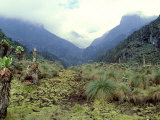 Path Across Upper Bigo Bog Towards Maln Mts  Rwenzori Mountains  Uganda