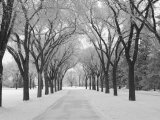 Winnipeg Manitoba  Canada Winter Scenes
