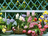 Hyacinth  Tulip  Squill  Daffodil and Azalea