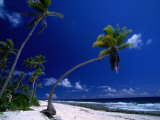 Bent Palm Tree on Beach  French Polynesia