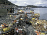 Crab Pots on Shore of Cornet Bay  Whidbey Island  Washington  USA