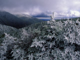 Snow Coats the Boreal Forest on Mt Lafayette  White Mountains  New Hampshire  USA