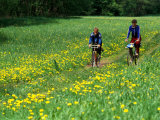 Bicyclists Ride Through Field of Dandelions  Gauja River  Gauja National Park  Latvia
